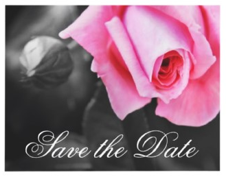 Romantic pink rose black and white wedding Save the Date announcement